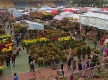flower market hong kong image