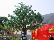 lam tsuen wishing tree photo