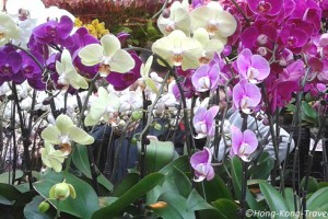 hong kong festivals and events in spring